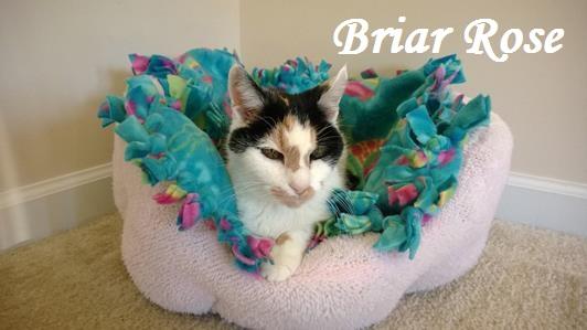 Briar-Rose-532x299