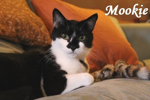 Mookie-513x342